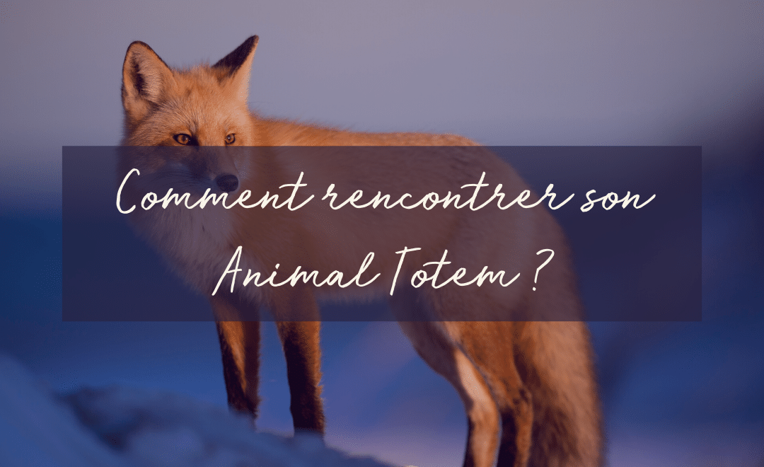 Comment Rencontrer son Animal Totem ?